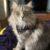 Profile picture of Vicki Bear